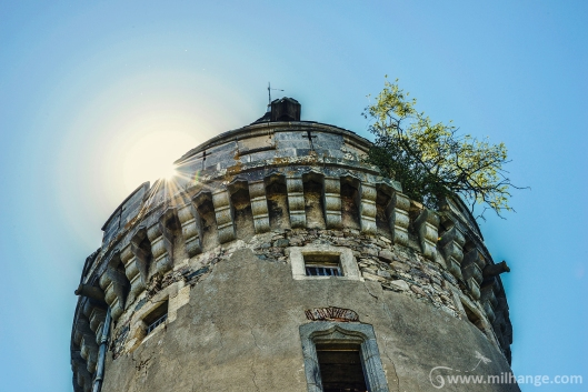 photo-urbex-chateau-abandonne-ruines-vegetation-decay-lost-place-11