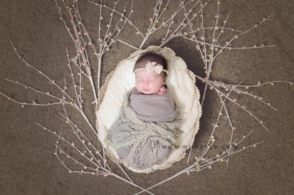 photo-nature-nouveau-ne-arbre-bordeaux-originale-art-2
